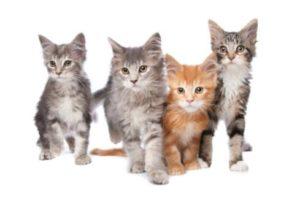best cat litter disposal system