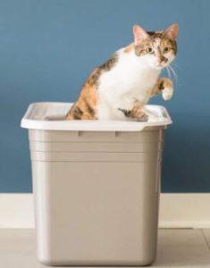 cat litter box house
