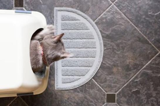 best cat litter box system