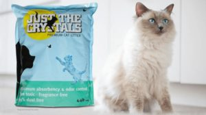 best organic cat litter