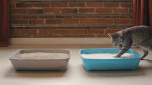 fast clumping cat litter