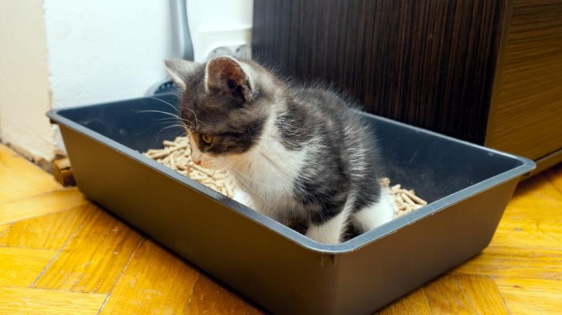 best natural clumping cat litter