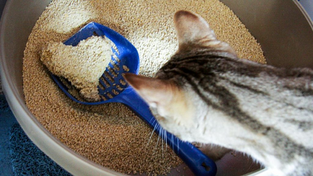 best affordable cat litter