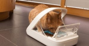 automatic pet feeders for cats reviews