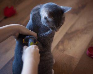 furminator long hair large cat deshedding tool