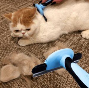 deshedding tool for short hair dogs