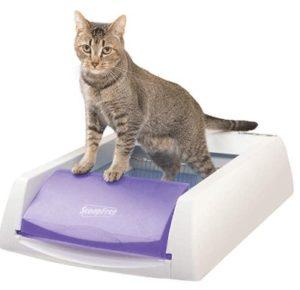 best odorless cat litter box