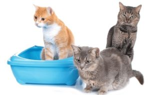 automatic cat litter box for multiple cats