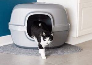 covered cat box