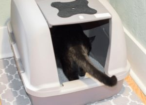 largest covered cat litter box