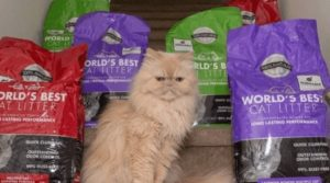 best cat litter for long hair cats