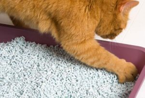 best cat litter for humidity