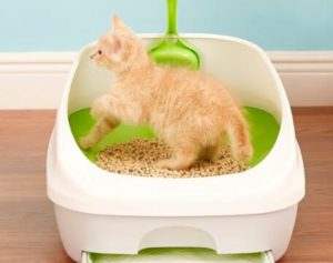 indoor cat litters