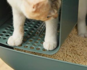best cat litter for male cats