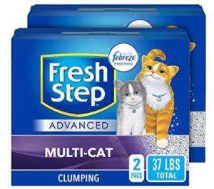 world's best cat litter multiple cat