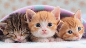 best clumping cat litter multiple cats