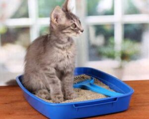 best cat litter for odor and clumping