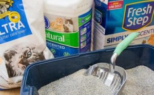 best cat litter for picky cats