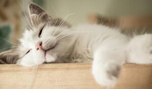 using cat litter for odor control