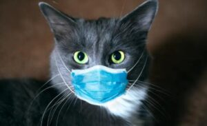 how to protect cat health