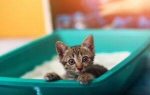 cheap cat litter for money