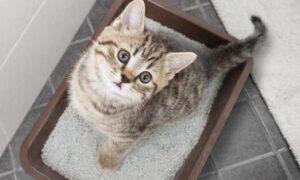 cat litter for money