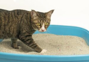 petsmart brand cat litter