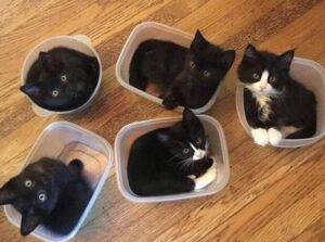 guides of cat litter for multiple cats