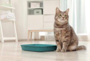 best kitty litter reviews