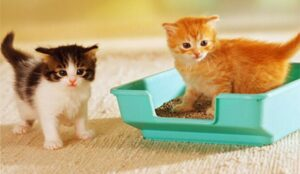 cat litter for 2 cats