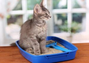 best cheap kitty litters