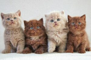guides of multiple cats litter