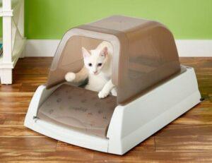 how often should you change kitty litter