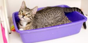 how to choose kitty litter