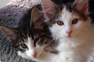 best clumping cat litter for 2 cats