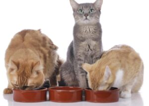 how to choose cat litter for 3 cats