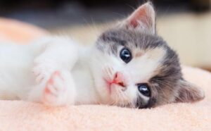 how to choose best brand of cat litter