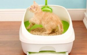 non-clumping cat litters