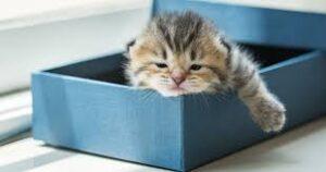 A cute kitty