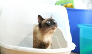 what types of litter box are the best for messy cats