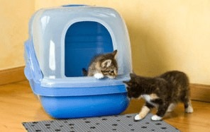 covered litter box for multiple cats
