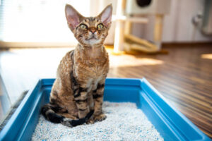 how deep should kitty litter be