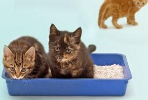 best cat litter box for 2 cats