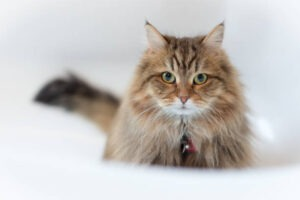 Why Should You Specially Pick Litter Box for Long Hair Cats
