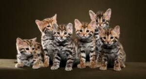 Is Your Bengal Cat Picky About Litter Boxes