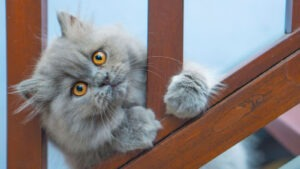 What to Avoid in Picking Litter Box for Long Hair Cats