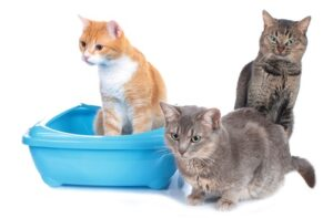 What size litter box for three cats to use