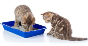 How Big of A Litter Box Do I Need for 2 Cats