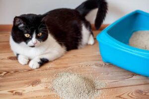 how to choose the best litter box for messy cats