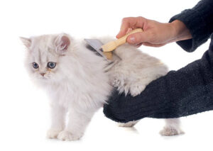 best litter box for persian cats